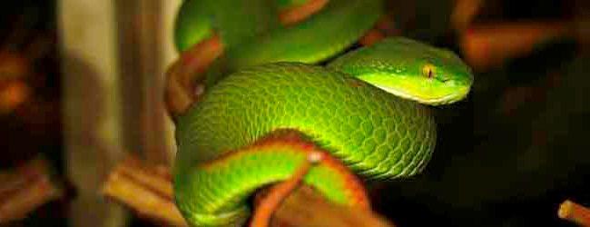 el año de la serpiente